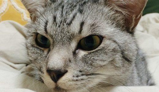 猫「このベッドは我々のものなんだが?」