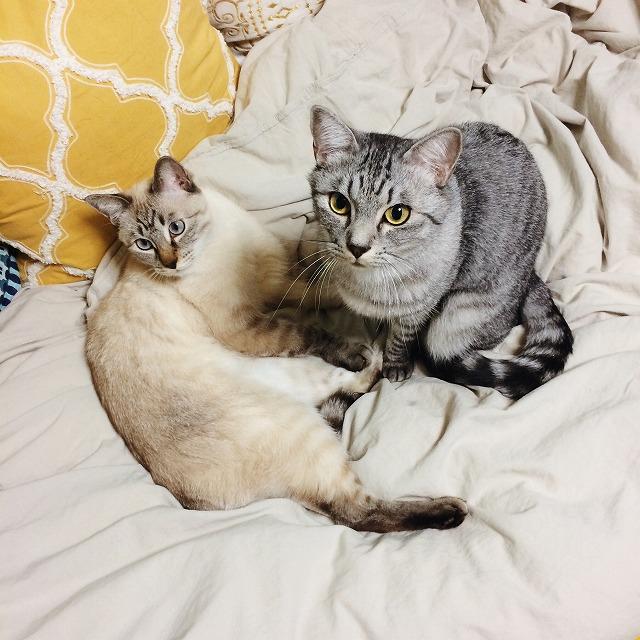 キョトンとした顔をしている猫たち。