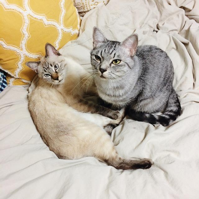 何か言いたげな顔の猫たち。