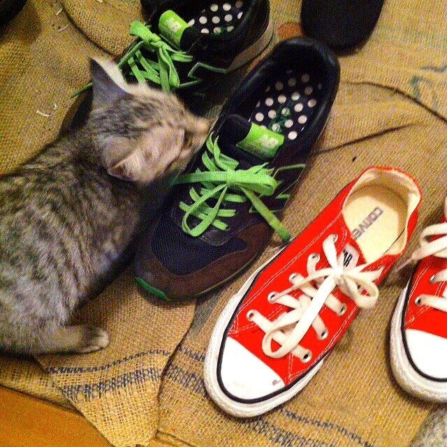 スニーカーと子猫。