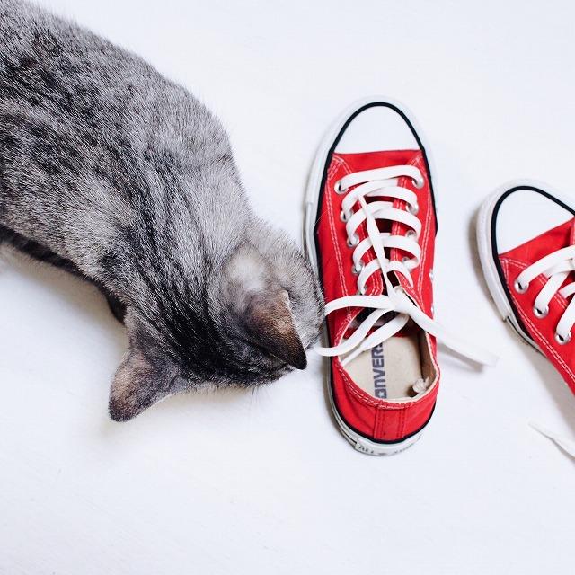成猫になったテト(サバトラ猫)と当時のスニーカーとの比較。