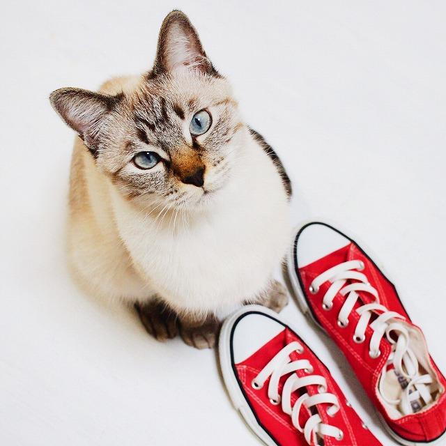 赤いスニーカーとムク(シャムトラ猫)。