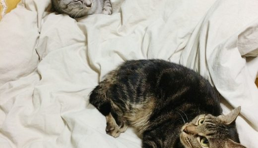 三色猫団子