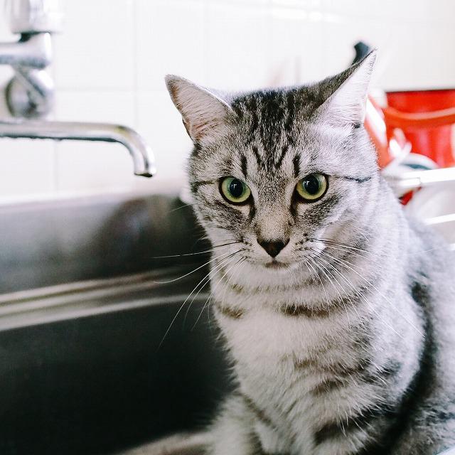 水遊びに夢中な猫