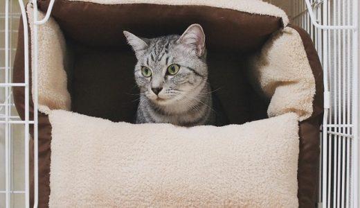 ダイソーの座布団で猫ベッドを作ってみた