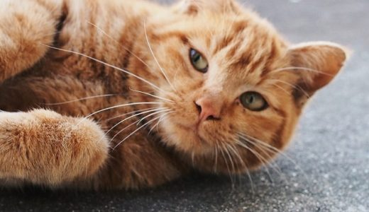 野良猫ミーちゃんの捕獲決行