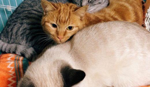 猫同士の仲は順調?と思いきや…