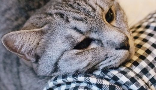 新年早々、体調不良な猫たち