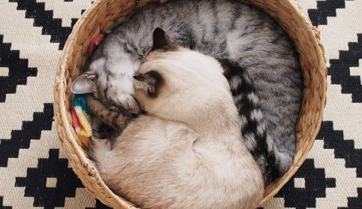 新しいラグと猫