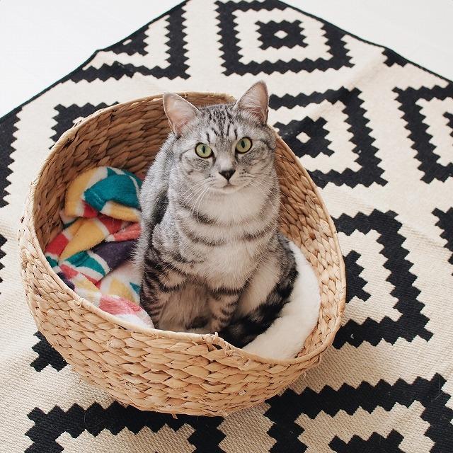 籠の中に座ってこっちを見上げているサバトラ猫を少し俯瞰で撮影した写真。