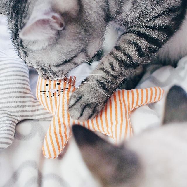 オレンジの猫おもちゃの味見をするサバトラ猫。