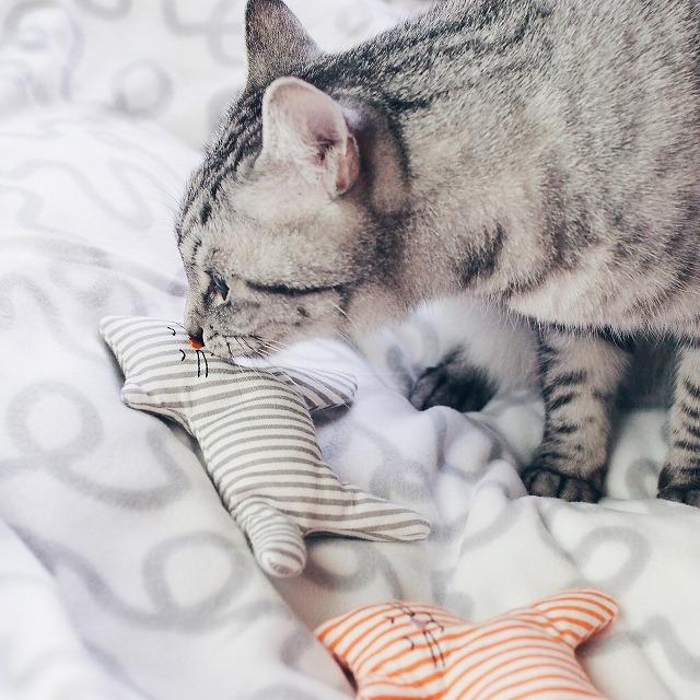 グレーの猫おもちゃと鼻キスするサバトラ猫。