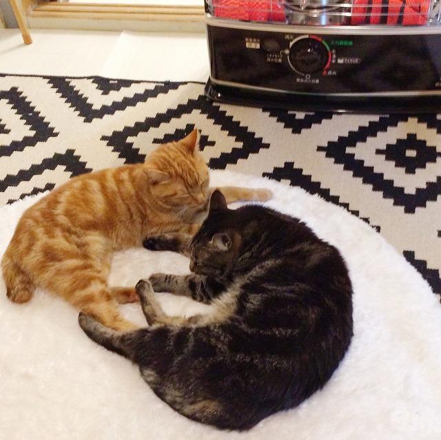 ストーブの前のラグの上に並んで寝そべっている茶トラ猫とキジトラ猫。