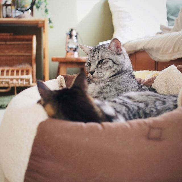 キジトラ猫に構うのを諦めた様子のサバトラ猫。