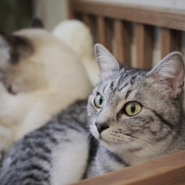 どこから見てもイケメンなサバトラ猫。