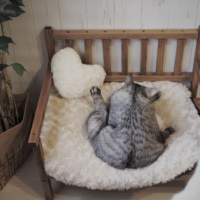 ベンチに座って毛づくろいをしているサバトラ猫の後ろ姿。