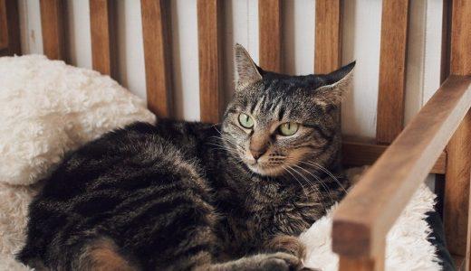 グルーミング中の猫はブサかわいい