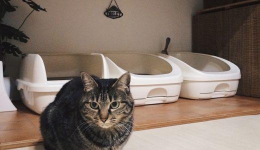 猫のための押入れリフォーム