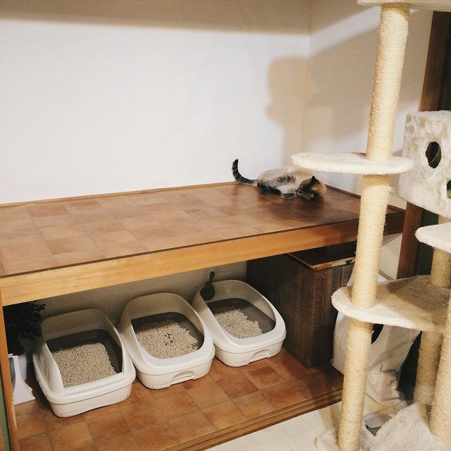 リフォームした押入れの上段と下段を写した写真。上段にシャムトラ猫が転がっている。
