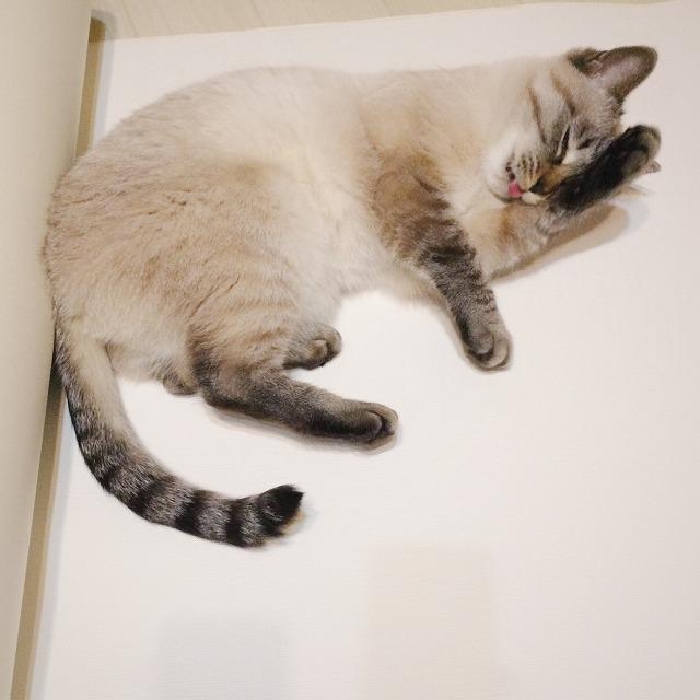 床に広げた壁紙の上に寝そべって顔を洗っているシャムトラ猫。