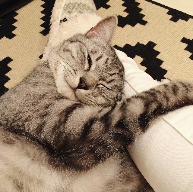 目を細めてうっとりした表情のサバトラ猫。