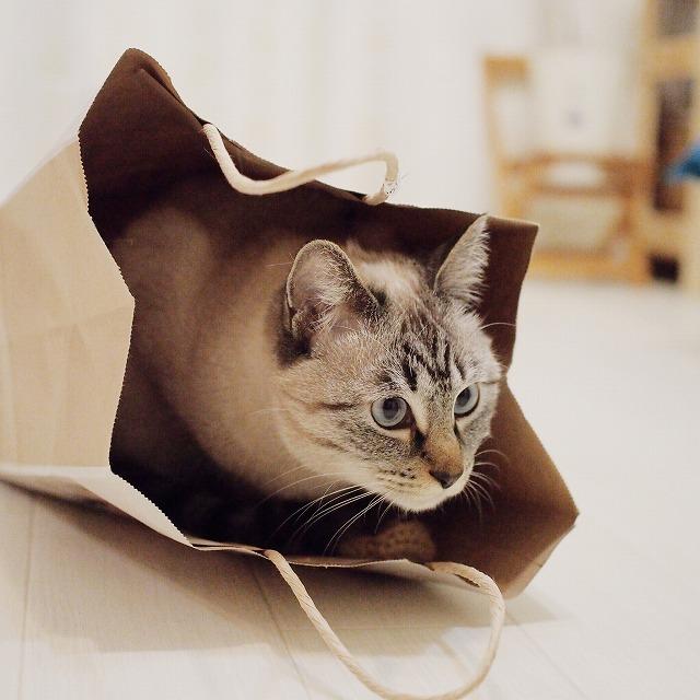 袋の中から何かを狙ってる?