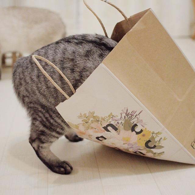 紙袋に上半身を突っ込んでいるサバトラ猫のお尻。