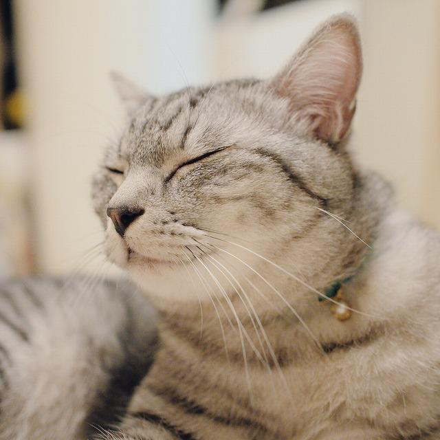 目を閉じているサバトラ猫の顔を斜め下から見たアップ。