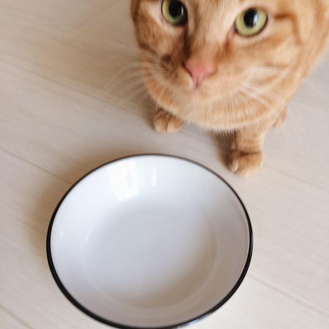 空になった皿と、こちらを見上げる茶トラ猫の顔。