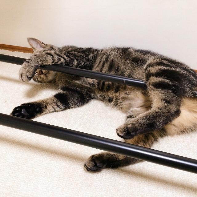 ハンガーラックの脚に手足をかけて寝ている変な寝相のキジトラ猫。