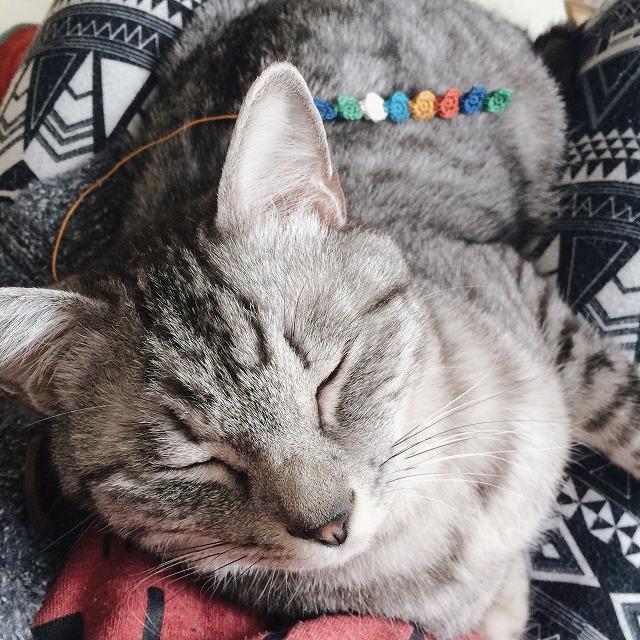 首輪を編んでいる最中の様子の写真。膝の上でサバトラ猫が寝ています。