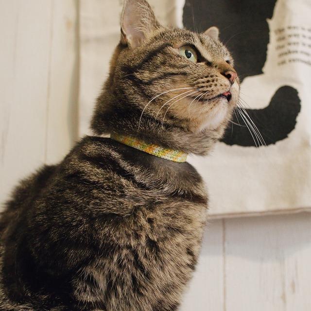 目を見開き、ちょっと口から舌がはみ出ているキジトラ猫。