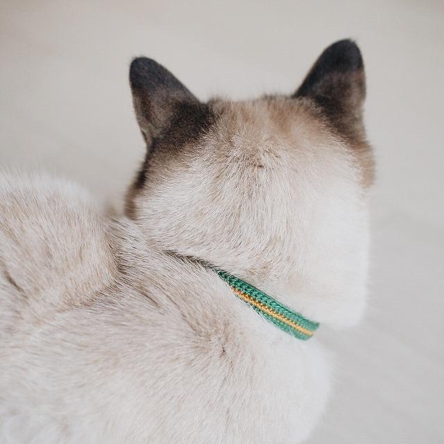 緑の首輪を付けているシャムトラ猫の後頭部。