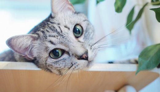 猫と水挿しウンベラータ