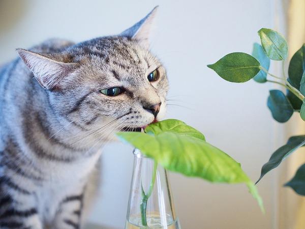 葉っぱにかじりつこうとしている