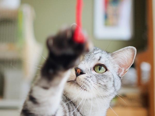 毛糸にパンチするサバトラ猫