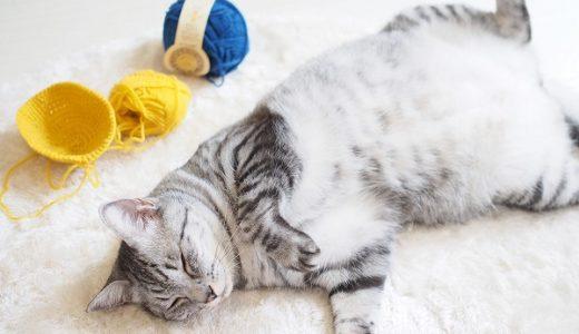 猫と毛糸玉と