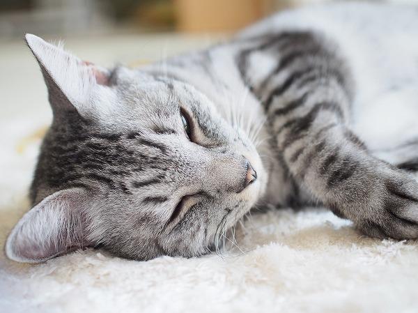 眠たそうな顔