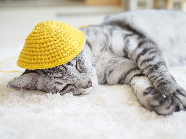 寝ているサバトラ猫に編みかけのかぎ針編みをかぶせてみる