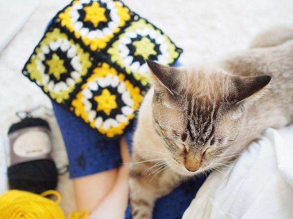 かぎ針編みのモチーフとひざに乗ってきたシャムトラ猫