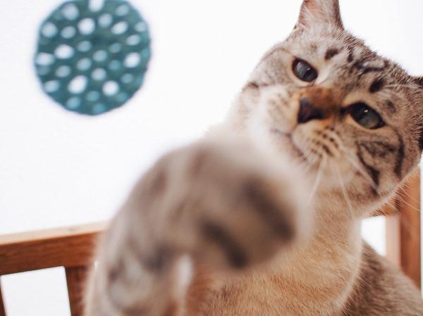 猫パンチ空振り