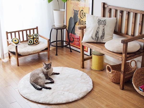 ラグの上に寝そべってるシャムトラ猫