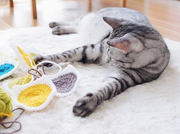 モチーフを前足でもてあそぶサバトラ猫