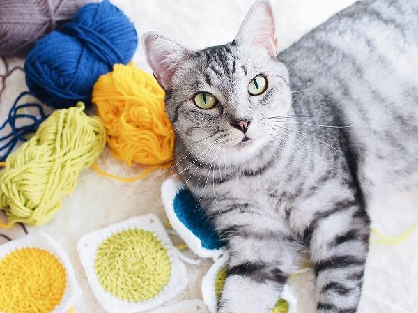 並べたかぎ針編みのサークルモチーフの上に乗っかって寝そべってるサバトラ猫