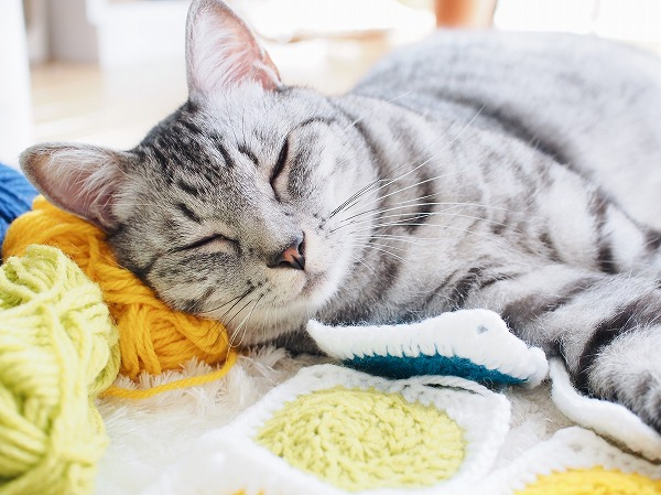 毛糸を枕にしてスヤァ