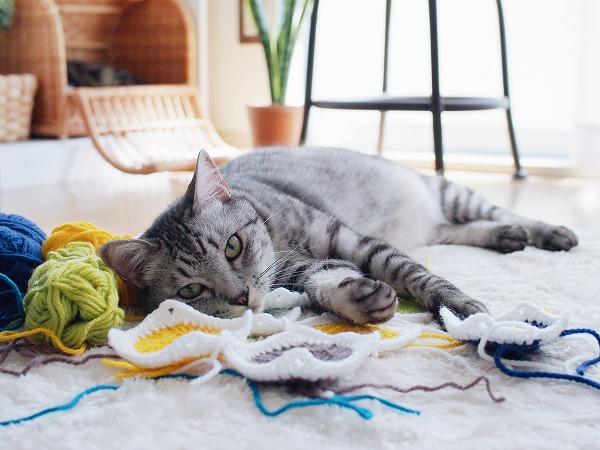 寝たままこっちを見てるサバトラ猫