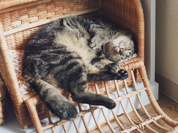 ラタンバスケットの中で仰向けになって気持ちよさそうに寝ているキジトラ猫
