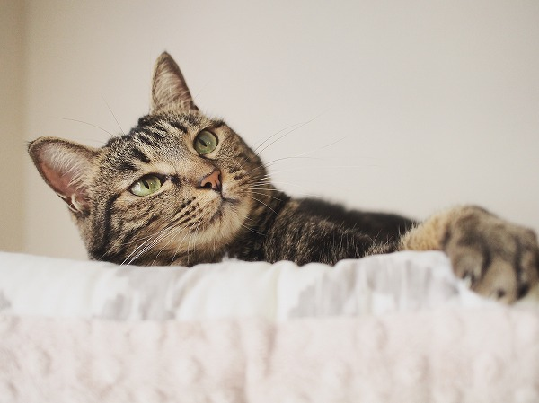 ベッドに横になってくつろいでいる