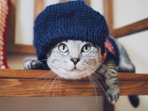 フードをかぶった丸顔サバトラ猫