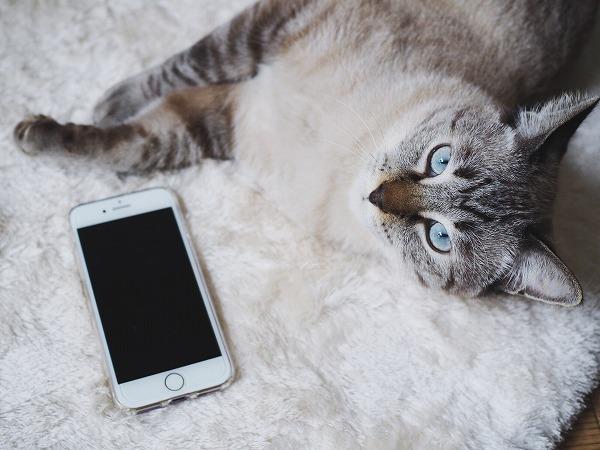 シャムトラ猫とiphone7